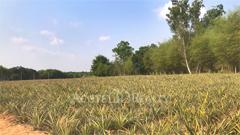land-for-sale-tambon-phana-nikhom-ban-khai-rayong