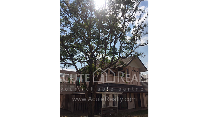 House  for sale & for rent Chet Yod Rd., Changpuak image17