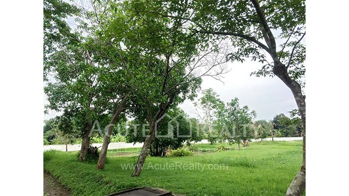 Land  for sale Mae Rim - Samoeng Rd. image3