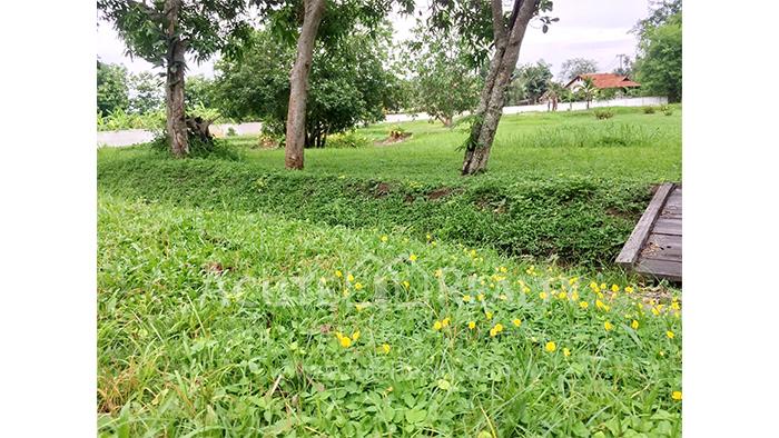 Land  for sale Mae Rim - Samoeng Rd. image4