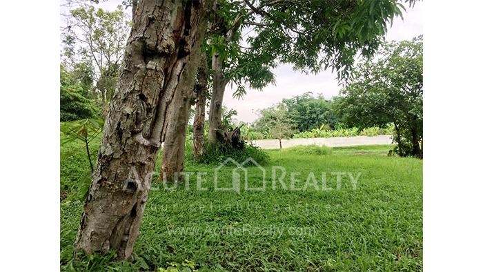 Land  for sale Mae Rim - Samoeng Rd. image7