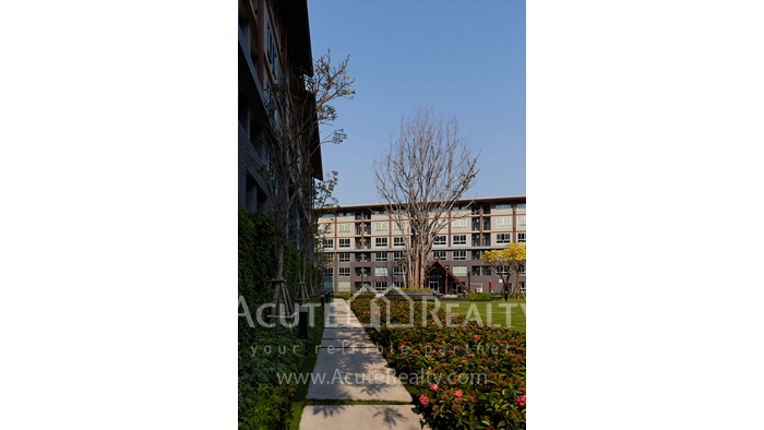 Condominium  for sale Dcondo Campus Resort Suthep image3