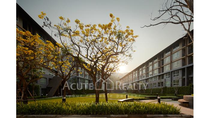 公寓  for sale Dcondo Campus Resort Suthep image4