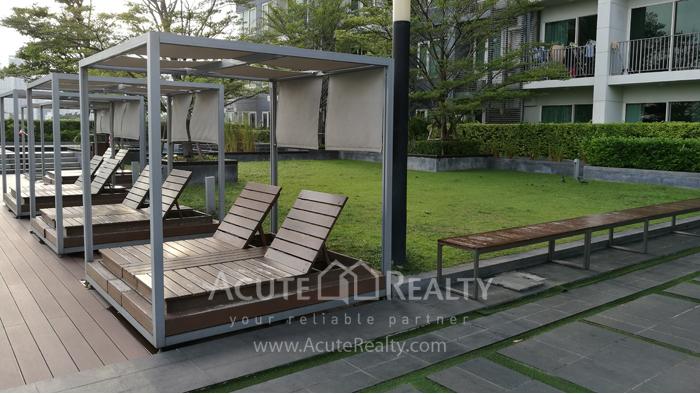 Condominium  for rent Siri at Sukhumvit Sukhumvit image16