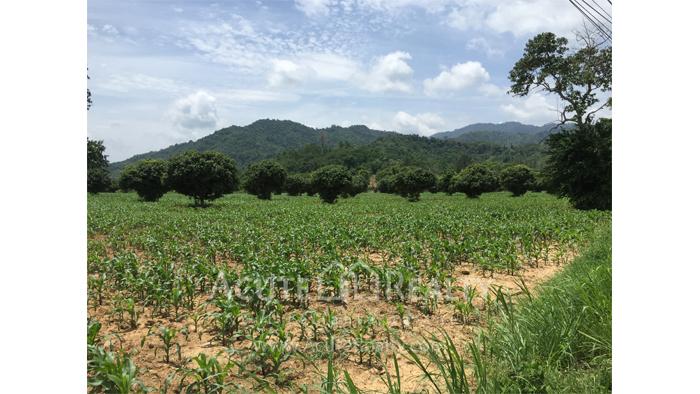 Land  for sale Kaoyai  image6