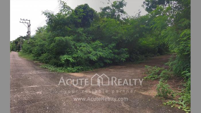 Land  for rent San Pu Loei image0