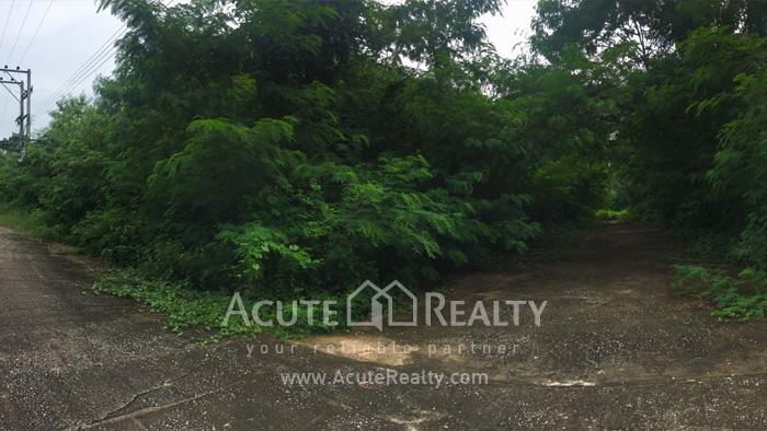 Land  for rent San Pu Loei image1