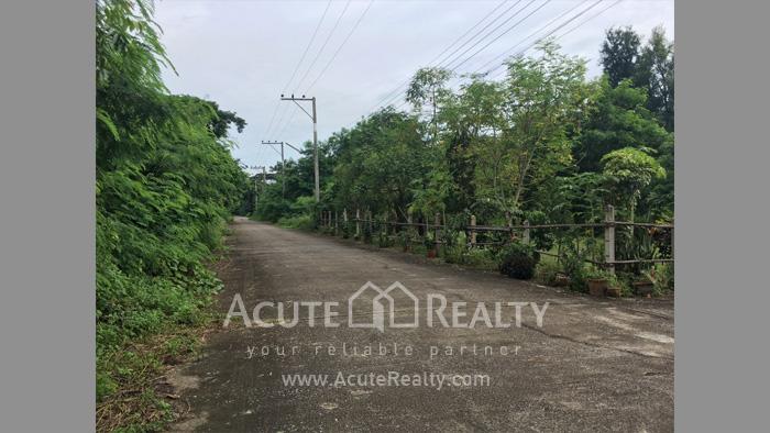 Land  for rent San Pu Loei image4