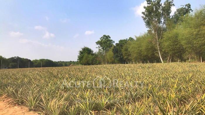 Land  for sale Tambon phana Nikhom Ban Khai Rayong image0