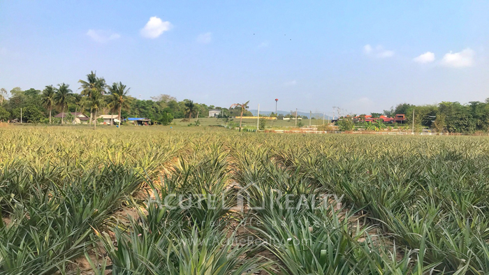 Land  for sale Tambon phana Nikhom Ban Khai Rayong image4