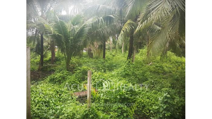 Land  for sale Bang kra choa, Phra Pra Daeng. image3