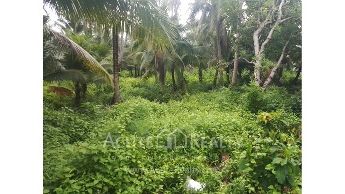 Land  for sale Bang kra choa, Phra Pra Daeng. image4