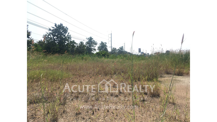Land  for rent Saraphi image4