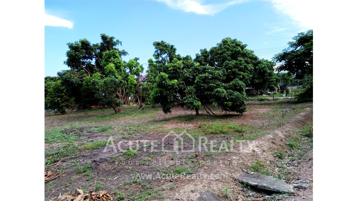 Land  for sale Chiang Mai-Hod Road image5