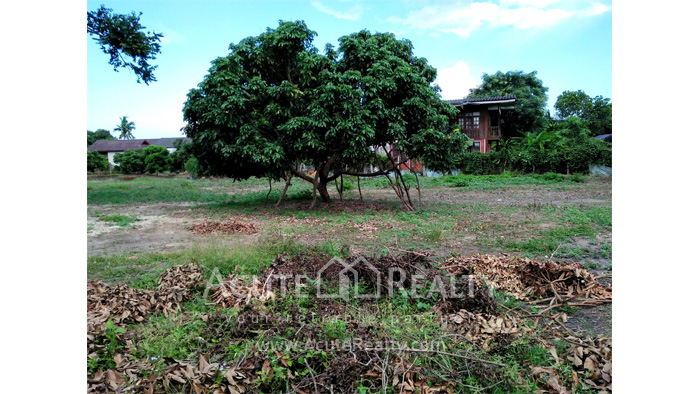 Land  for sale Chiang Mai-Hod Road image6