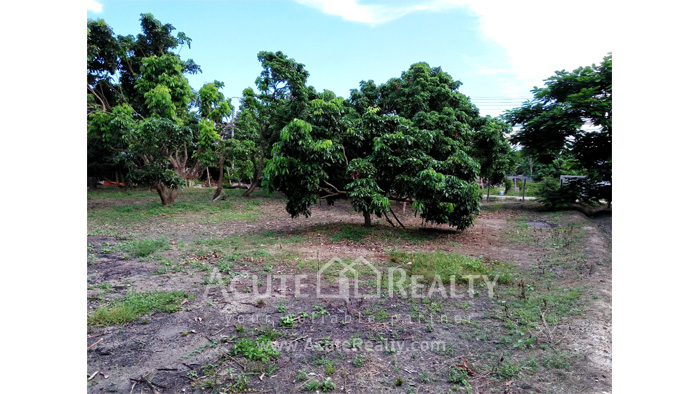 Land  for sale Chiang Mai-Hod Road image7
