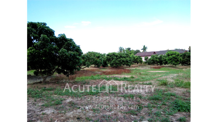 Land  for sale Chiang Mai-Hod Road image8