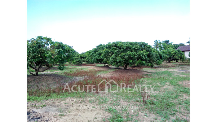 Land  for sale Chiang Mai-Hod Road image9
