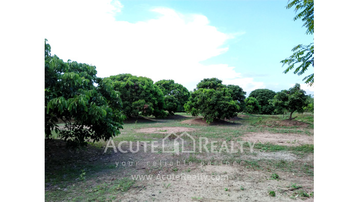 Land  for sale Chiang Mai-Hod Road image12