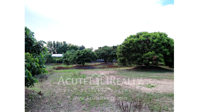 Land  for sale Chiang Mai-Hod Road image13