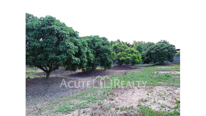 Land  for sale Chiang Mai-Hod Road image15