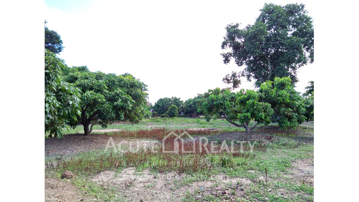 Land  for sale Chiang Mai-Hod Road image16