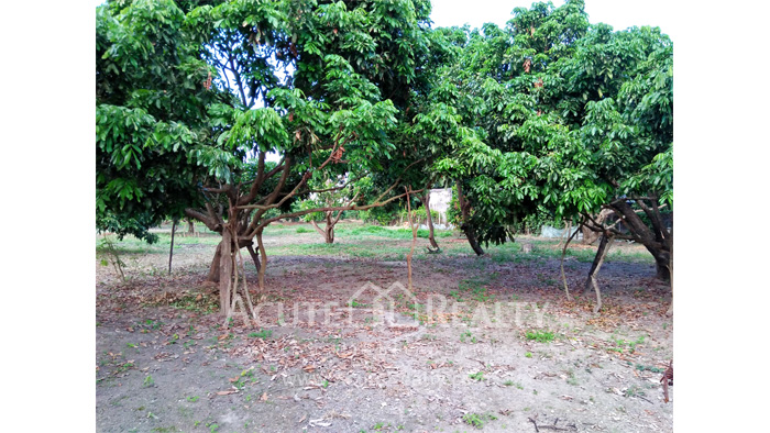 Land  for sale Chiang Mai-Hod Road image17