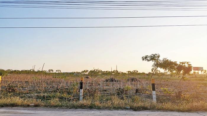 Land  for sale Chonburi-Pattaya Hwy, Bang Phra.  image3