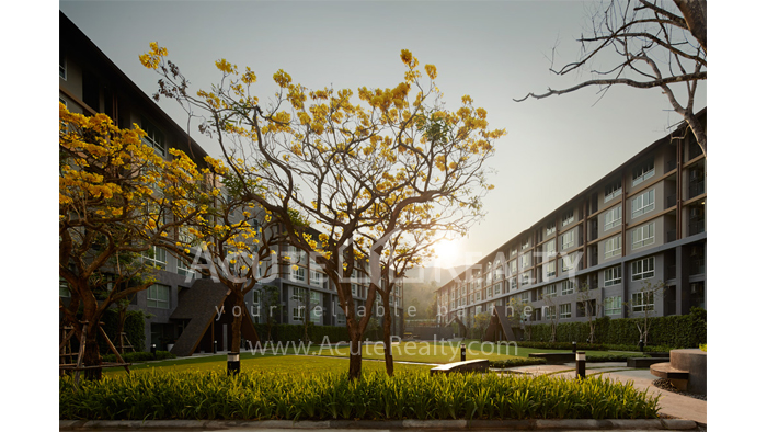 Condominium  for sale Dcondo Campus Resort Suthep image17
