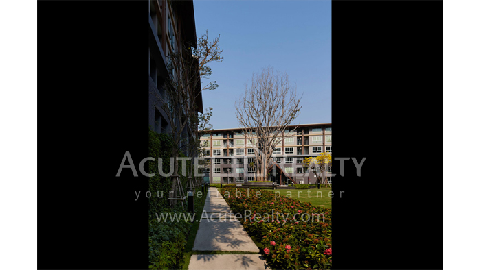 Condominium  for sale & for rent Dcondo Campus Resort Suthep image13
